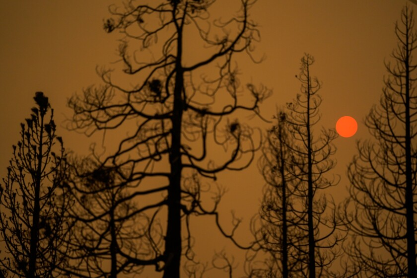 Burned trees silhouetted by the sun