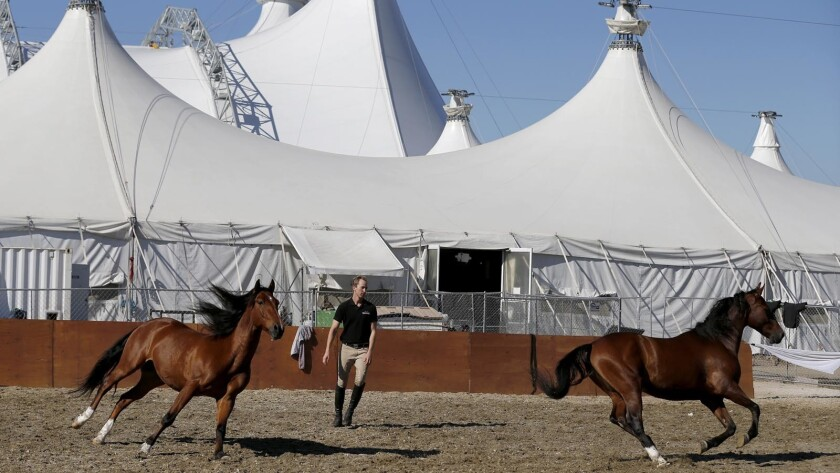 "Steven Paulson works with horses at the ""Odysseo"" site in Irvine on  Nov. 14."