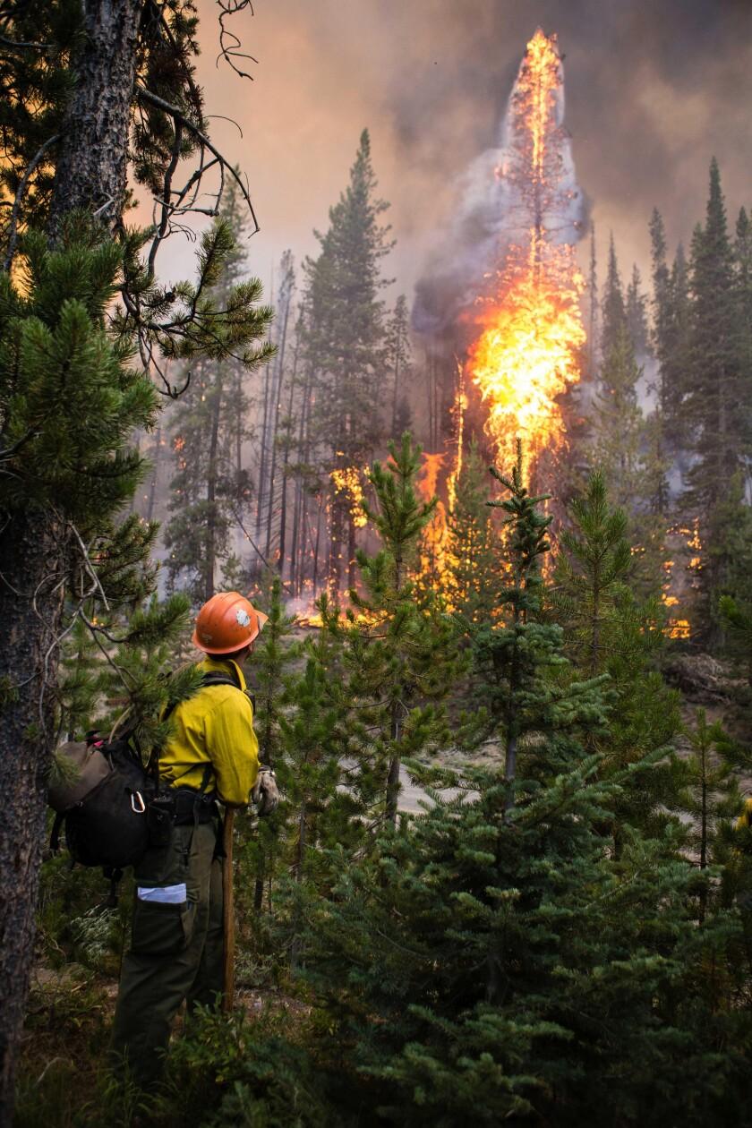 Forest Restoration-Court Battle
