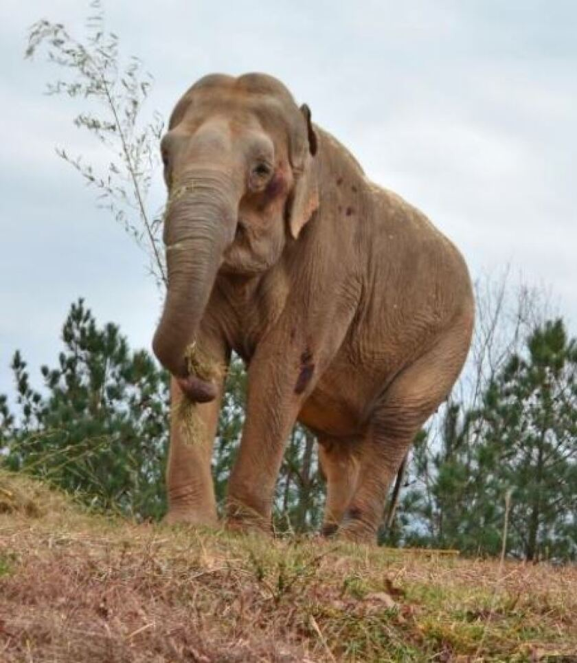 "Inga considers the best gift she ever gave a child was to ""adopt"" for her granddaughter an Asian elephant named Shirley."