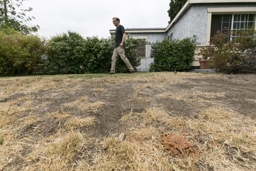 FILE:  In this file photo from Thursday, July 17, 2014, Michael Korte walks on his brown lawn at his home in Glendora, Calif.  Most Californians have heard by now that they should stop watering their lawns to save water in the drought. But there are smaller steps to take, too, from taking shorter s