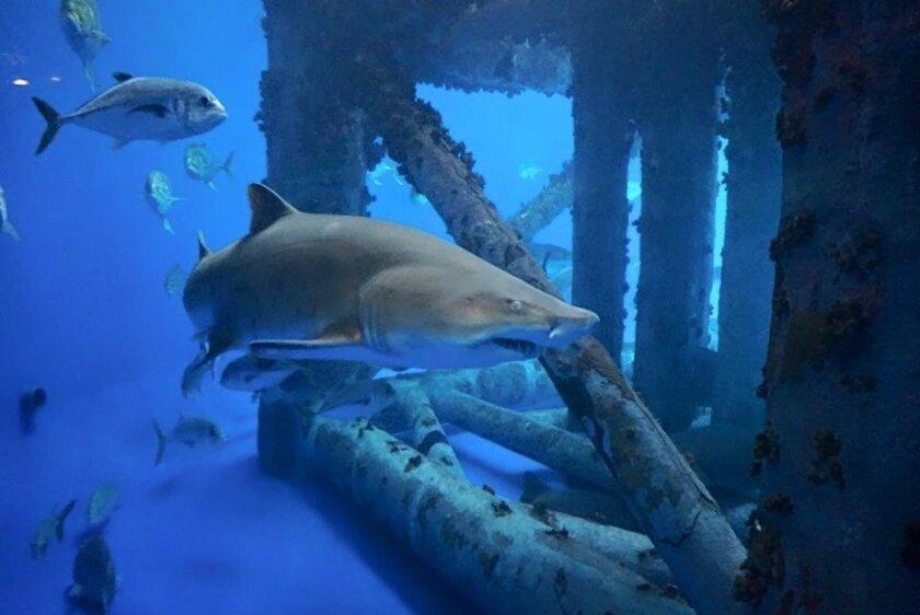 The Islands of Steel exhibit at Texas State Aquarium.