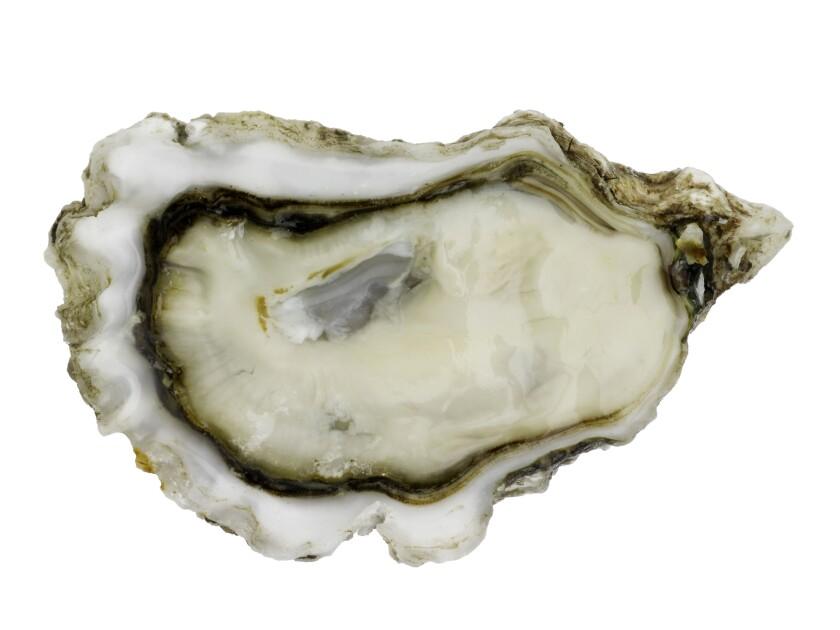 Crassostrea gigasa, the West Coast oyster.