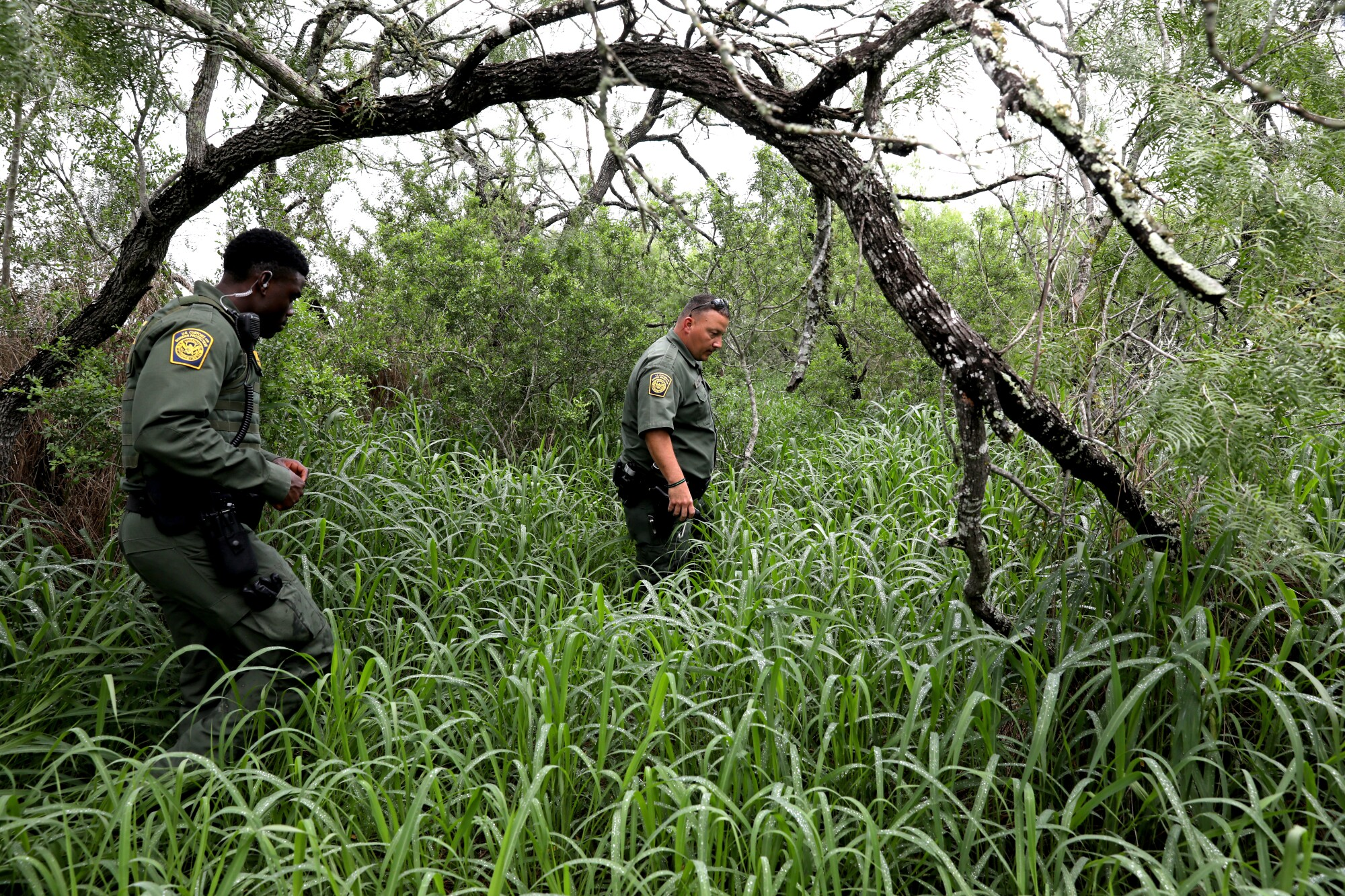 Two border agents walk in tall grass.