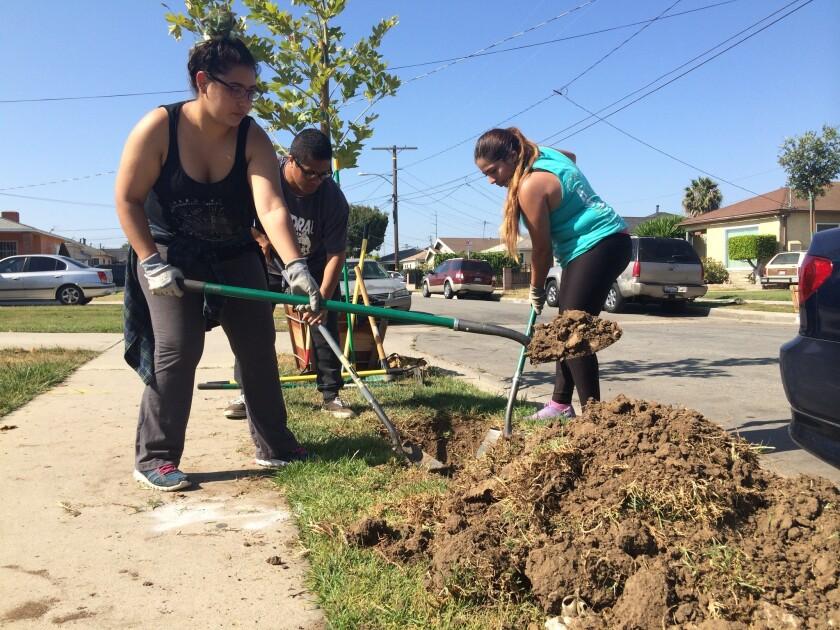 Un grupo de jóvenes voluntarios de la organización From Lot to Spot ayudan a plantar más árboles en Lennox y de paso a mejorar el medio ambiente; además de hacer que la comunidad luzca mejor.