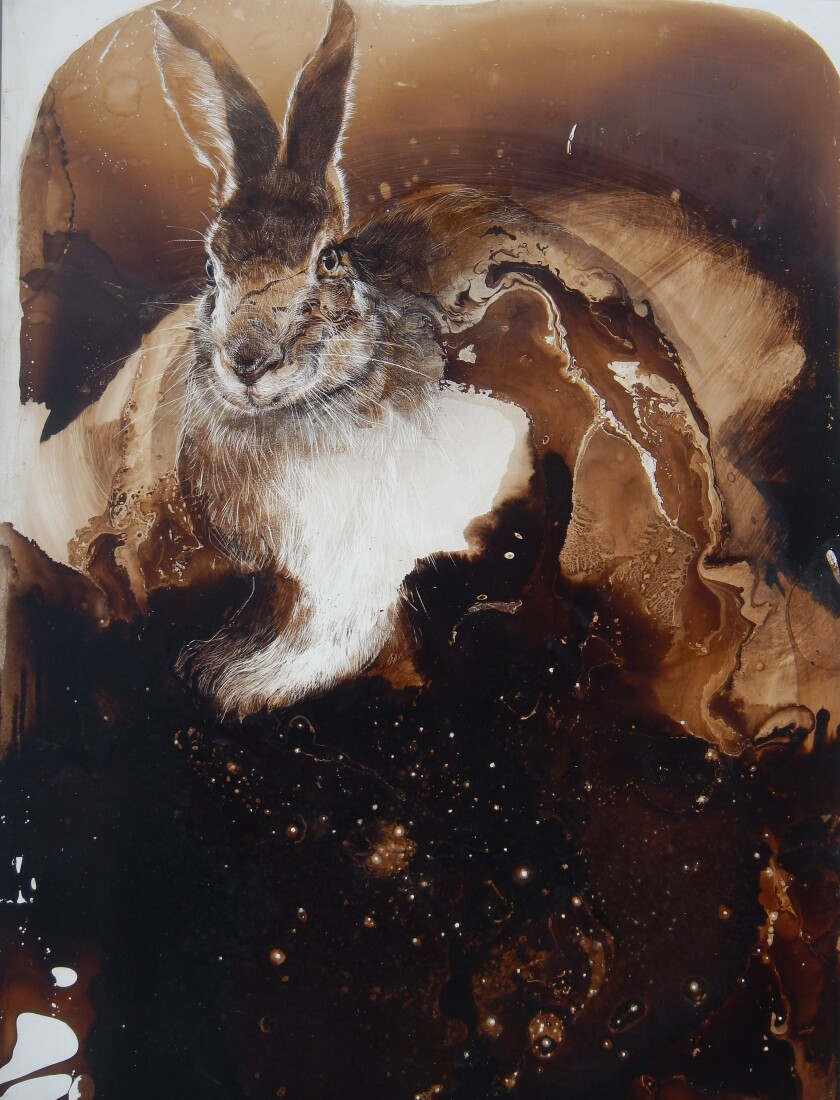 """Rabbit in Star Light"" by James Griffith, 2019. Tar on panel, 24 inches by 18 inches"