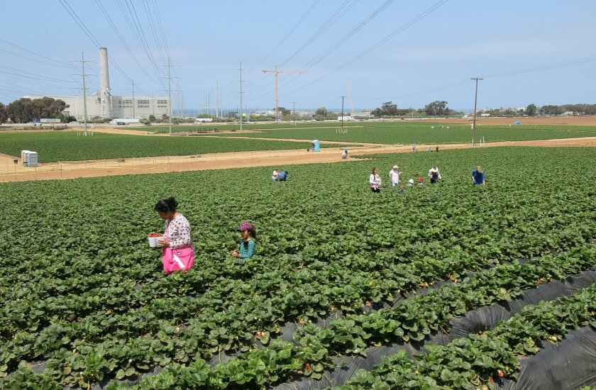 North County Advocates filed a legal challenge Wednesday to the Caruso Affiliated-backed initiative to build a shopping center and preserve open space on the strawberry fields near Agua Hedionda Lagoon.
