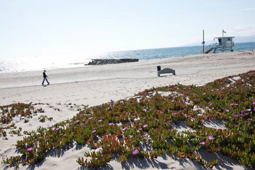 coronavirus  dockweiler beach could be a quarantine zone