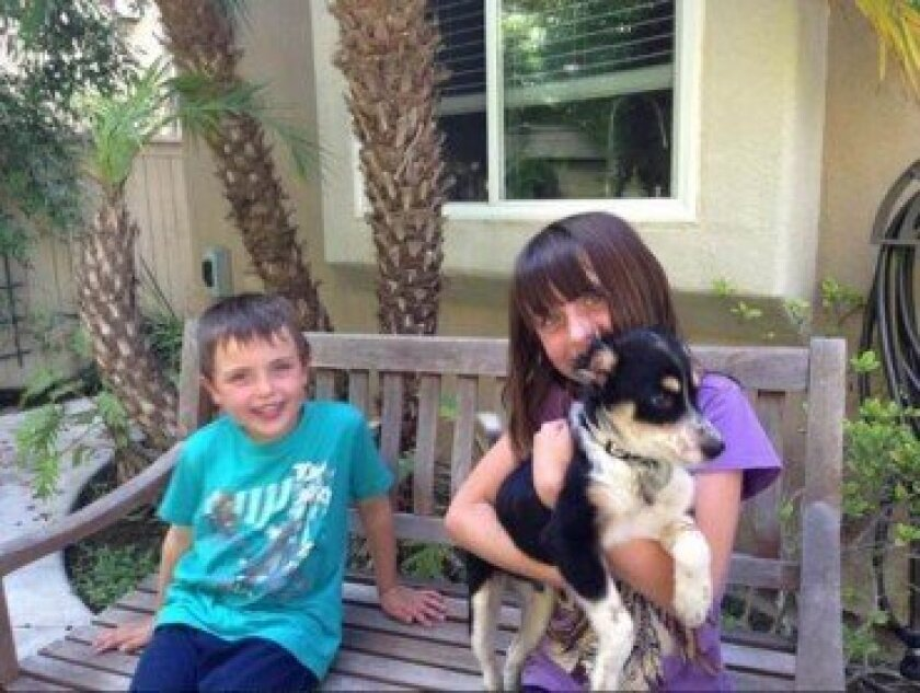 Pongo with the children in his new family. Courtesy photo