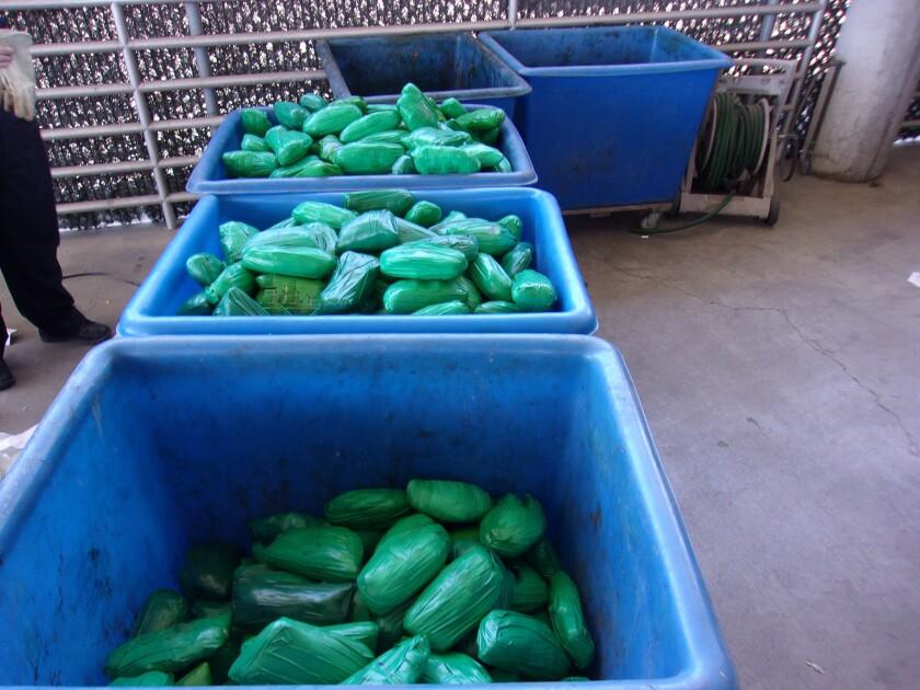 Three bins full of packages of meth disguised as cactus parts