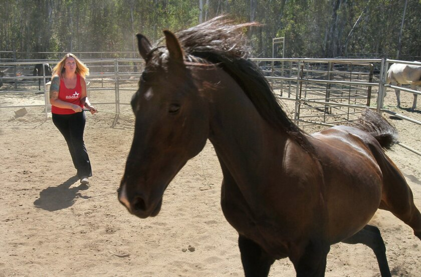 Michele Cochran trains a horse at the HiCaliber Horse rescue farm where she is the facility's founder and director.