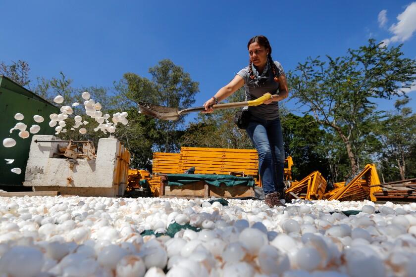 Integrantes de la organización H20 laboran en la preparación de cascarones de huevo