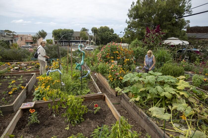 After 10 years, South Laguna garden still demonstrates community till power