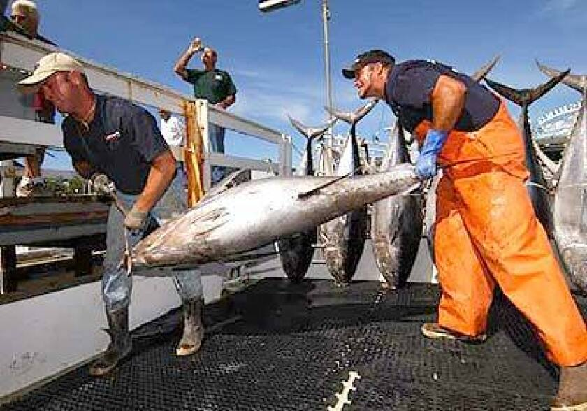 Anglers hammer giant tuna - Los Angeles Times