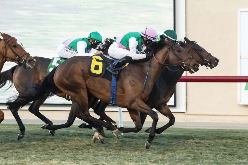 horse betting tips san diego