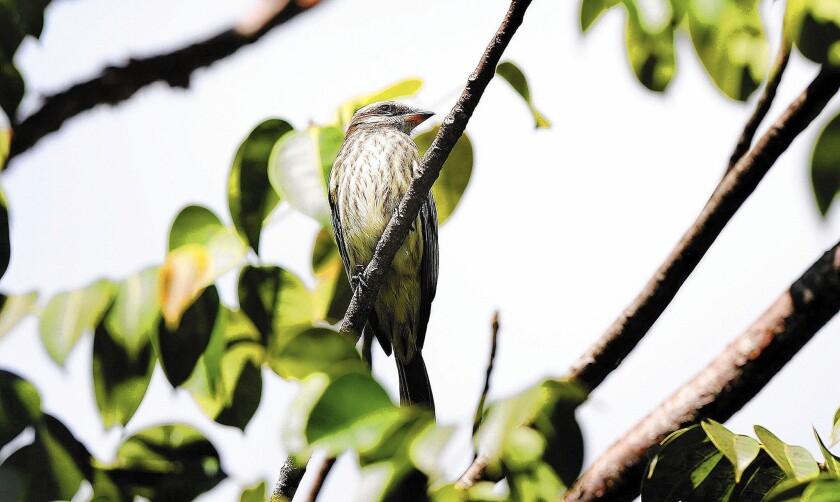 Florida cemetery visitor has bird watchers buzzing