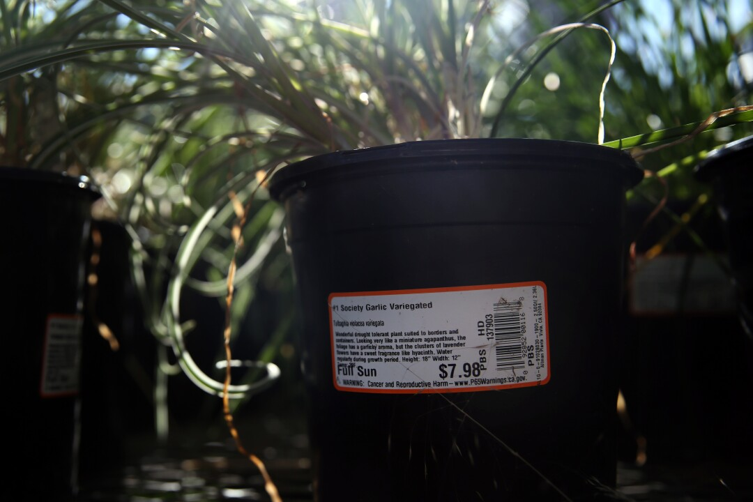 A Proposition 65 warning label on a potted plant for sale at Home Depot.