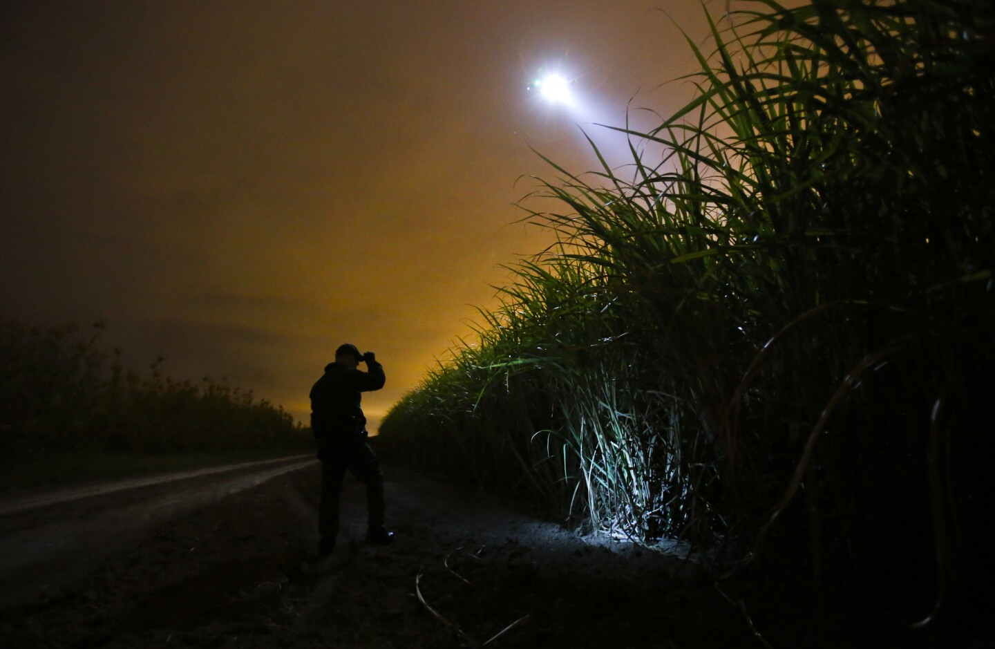 A border patrol agent and a helicopter search a sugar cane field for undocumented immigrants outside McAllen, Texas.