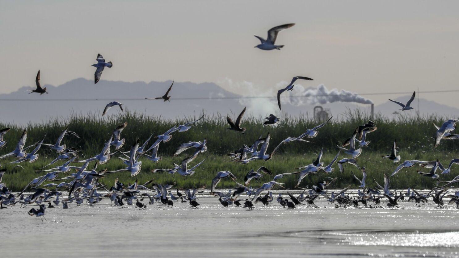 Odor advisory issued for Salton Sea area
