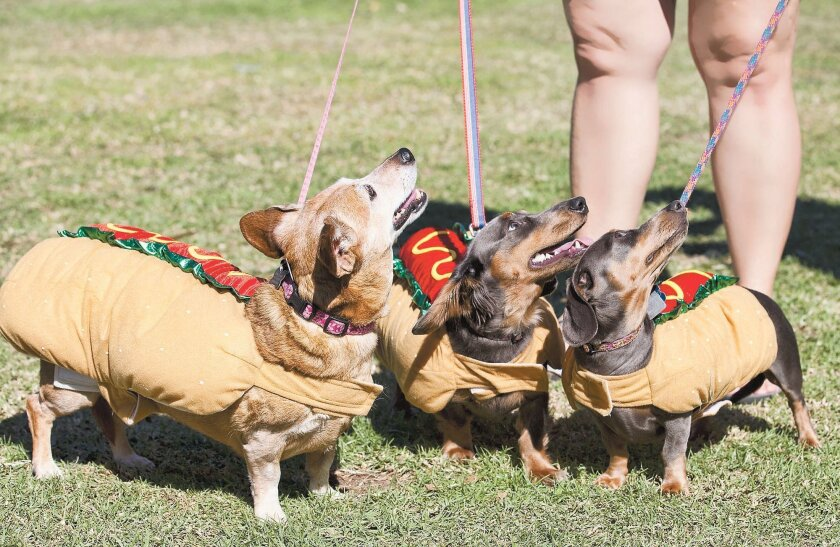 Last year, three dachshunds came dressed as — you guessed it — wieners for the annual parade and picnic.
