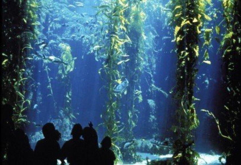 Birch Aquarium's kelp forest mimics Southern California's diverse marine ecosystem.  Courtesy