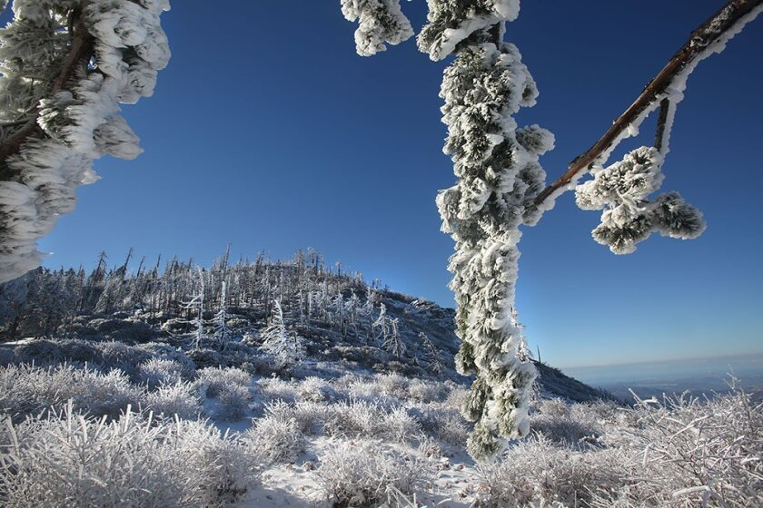 In a 2015 file photo, snow adorns tree branches on Cuyamaca Peak.