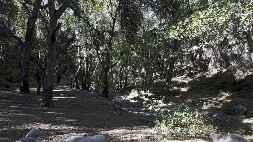 The Oaks tree and other trees crearte deep shadows at the Switzer Falls Trail in the Angeles Nationa